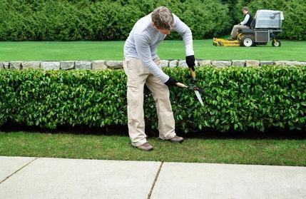 soci t de nettoyage au maroc jardinage hygi ne entretien. Black Bedroom Furniture Sets. Home Design Ideas